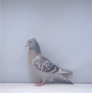 berner-lerche-zofingen-2000-155