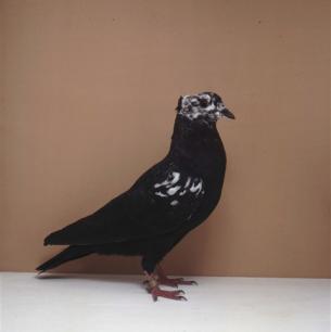 berner-rieselkopf-mit-flankenflugelrosen-worb-1993-75