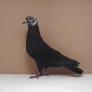 berner-rieselkopf-zofingen-1993