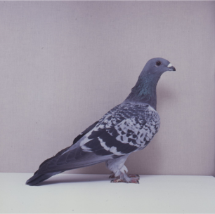 eichbuhler-blau-gehammert-willisau-1990-663