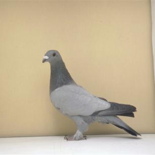 eichbuhler-blau-ohne-binden-romont-98-691