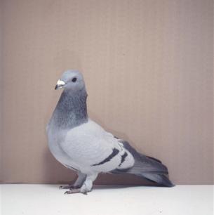 eichbuhler-munsingen-1987-54