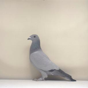 eichbuhler-nottwil-2002-685