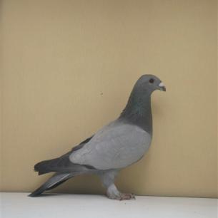 eichbuhler-romont-1998-691