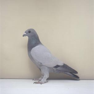 eichbuhler-romont-2003-580-1