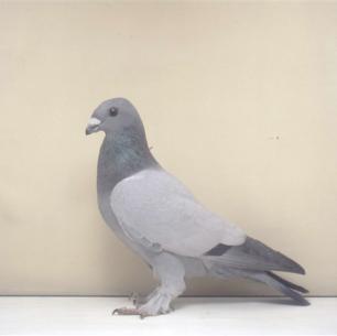 eichbuhler-romont-2003-580