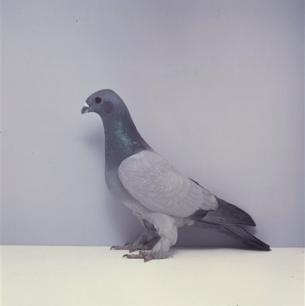 eichbuhler-wiedlisbach-1991-180