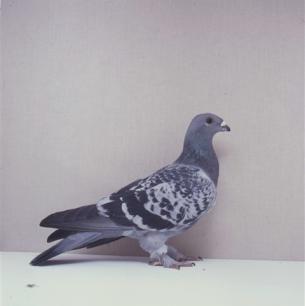 eichbuhler-willisau-1990-663