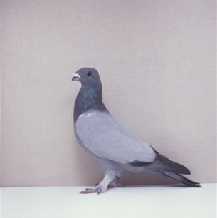 eichbuhler-willisau-1990-677-1