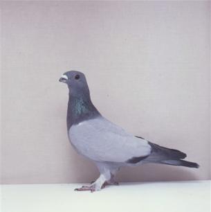eichbuhler-willisau-1990-677