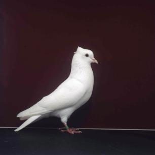 einfarbige-schweizerromont-1998-40
