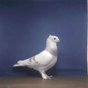 luzerner-braunelmer-romont-2003-567
