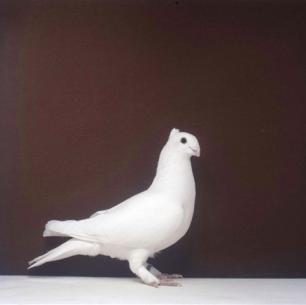 luzerner-einfarbig-arbon-2001-713