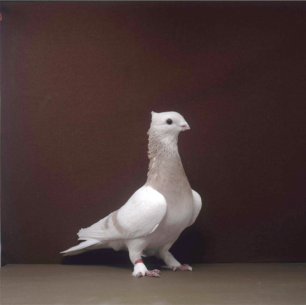 luzerner-einfarbig-arbon-2001-783