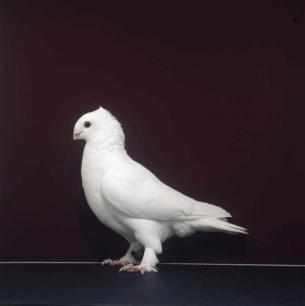luzerner-einfarbig-romont-1998-492-2