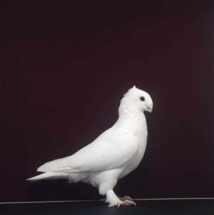 luzerner-einfarbig-romont-1998-492