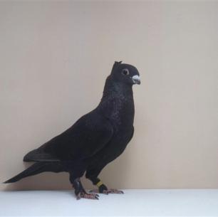 luzerner-einfarbig-schwarz-zofingen-1993-422