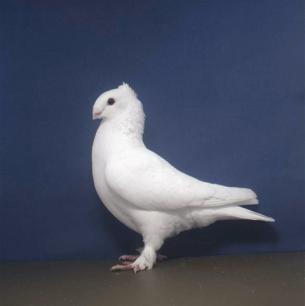 luzerner-einfarbig-wolhusen-2002-51-2