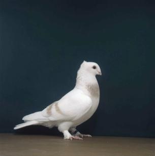 luzerner-elmer-gelb-romont-1998-617