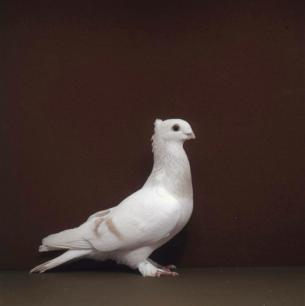 luzerner-elmer-gelb-zofingen-1993-499
