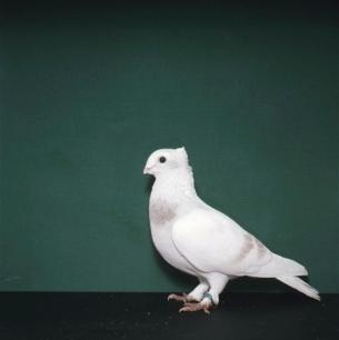 luzerner-elmer-willisau-1982-450
