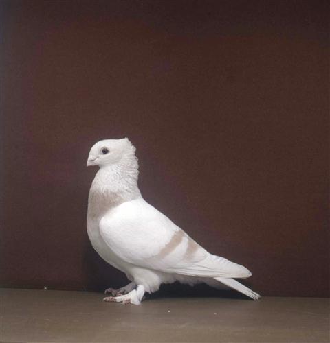 luzerner-elmer-wolhusen-2002-96-1
