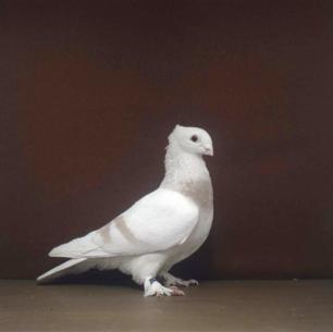 luzerner-elmer-wolhusen-2002-96