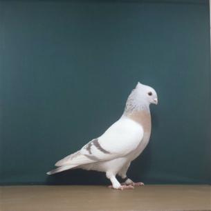 luzerner-goldkragen-romont-1998-595-1