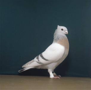 luzerner-goldkragen-romont-1998-595