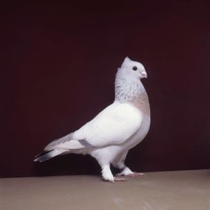 luzerner-goldkragen-sempach-1991-94-5-p