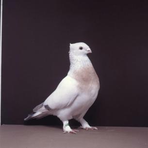 luzerner-goldkragen-willisau-1990-601