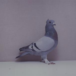 luzerner-kupferkragen-willisau-1990-557-1