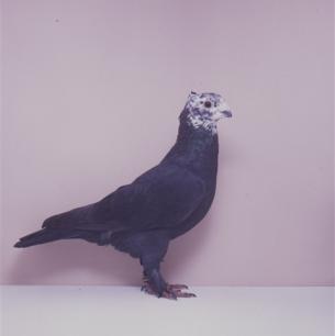 luzerner-riesekopg-sempach-1991-595