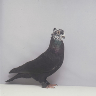luzerner-rieselkopf-romont-1998-623