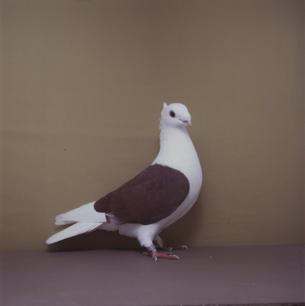 luzerner-schild-rot-willisau-1990-632-2