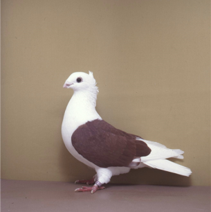 luzerner-schild-rot-willisau-1990-632