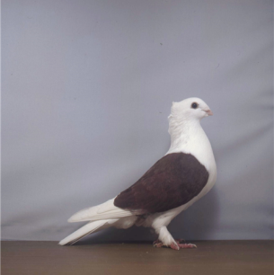 luzerner-schild-rot-willisau-1999-743