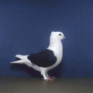 luzerner-schild-wolhusen-2002-87