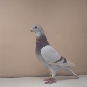 poster-arbon-2001-999