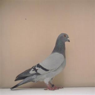 poster-blau-b-kant-belp-1998-223