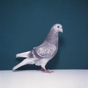 poster-rotfahl-zofingen-1985-576
